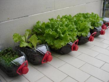 Gardening in bottles