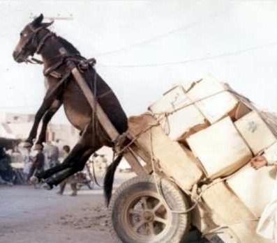Cart: 1, Donkey: 0